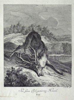 Elias Ridinger (1698-1767), Kupferstich, Par force Tod-gestürzter Hirsch, A0108